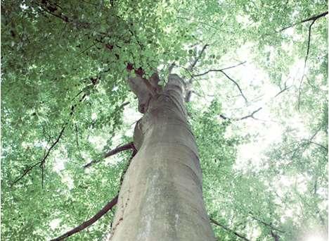 talking-tree